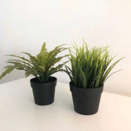 IKEA Plants (2 pots)